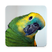 Amazon Parrot Wallpaper HD