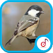 Download Bird Voice Collection 1.3 APK