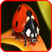 Download Insect Wallapper 1.3 APK