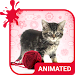 Download Pretty Cat Animated Keyboard + Live Wallpaper 2.50 APK